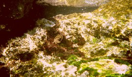 FotosRGES: th_Crab_under_water_HR_2004-s