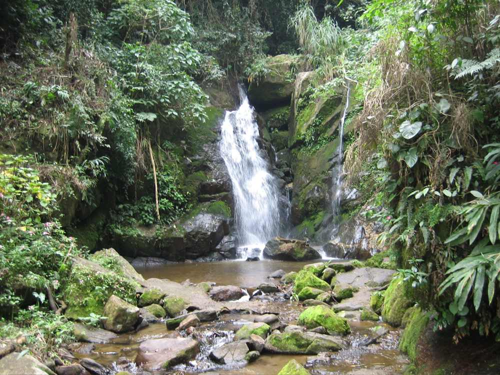 Waterfall in rainforest