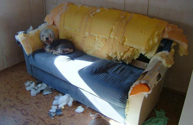 Lonely dog on wrecked sofa