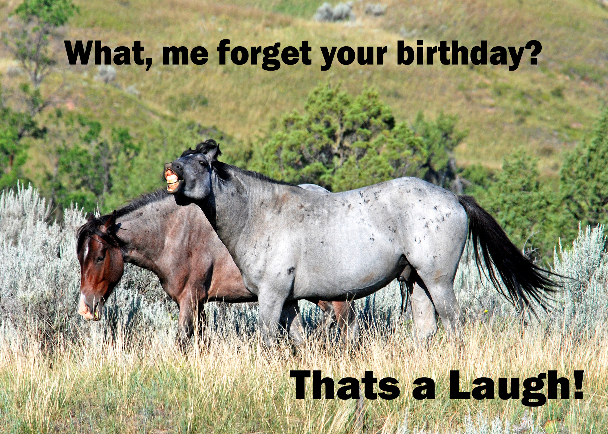 Laughing Horse Birthday   text