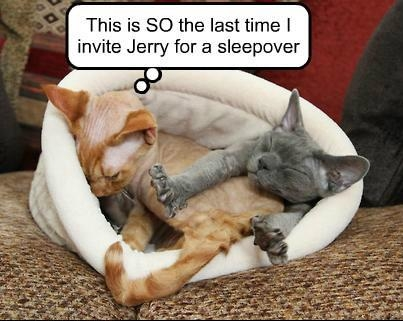 Cat sleeping with Jerry