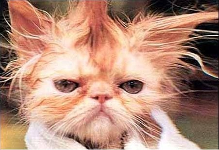 Cat with a bad hair day