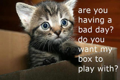 Kitten asks if you have a bad day so play in a box