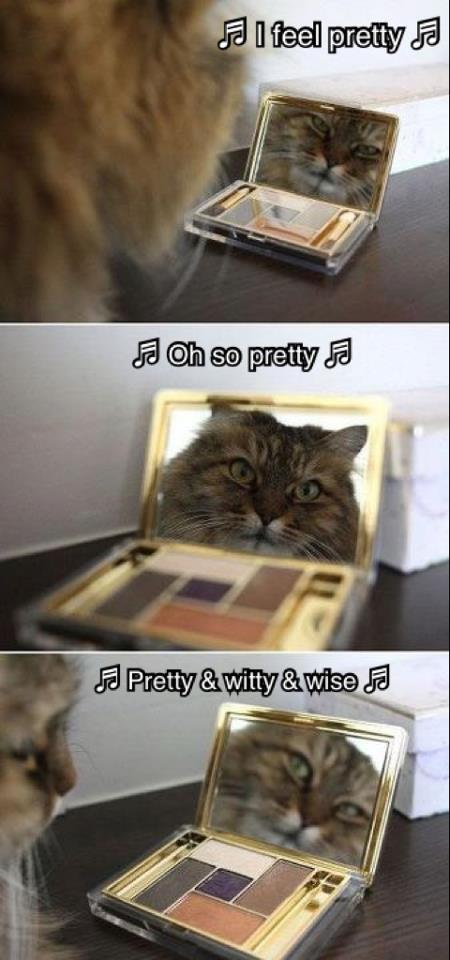 Pretty cat in mirror