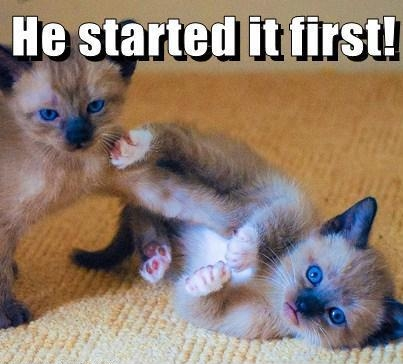 Which kitten started first