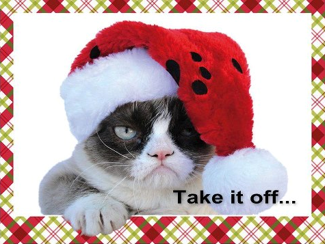 Cat Take off Christmas hat