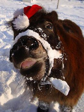 Christmas Pony in the snow
