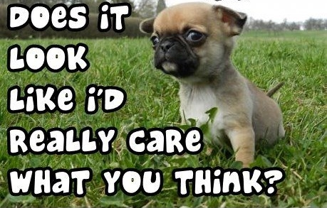 Cute puppy dog says Do I really care what you think