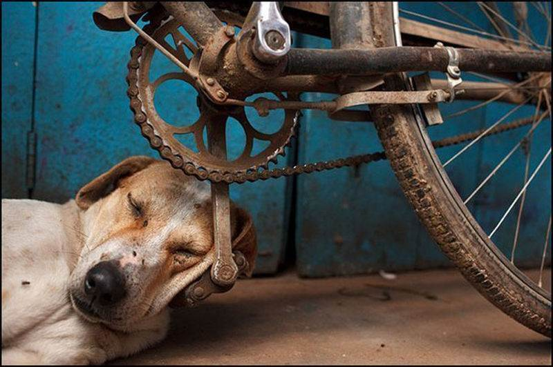 Dog used bicycle pedal as a pillow