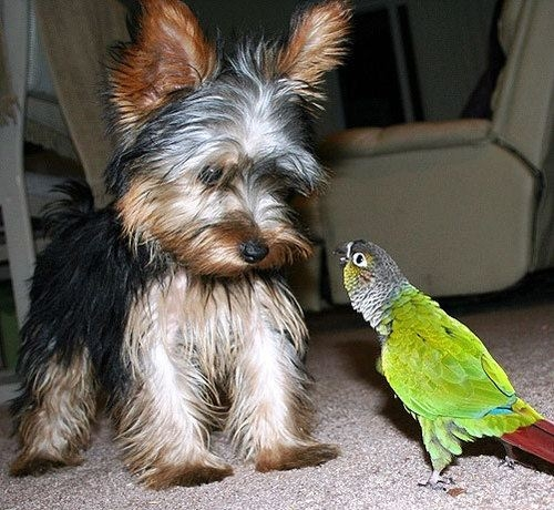 Little dog and parrot