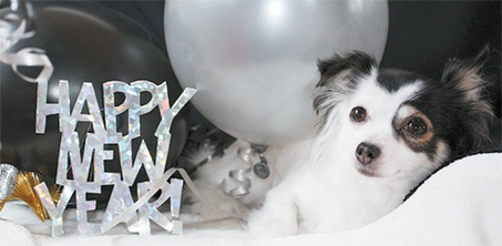 Doggy   Happy New Year text