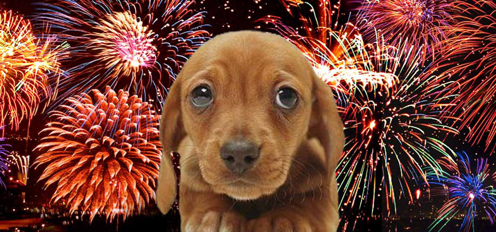 Sad Dog   Fireworks