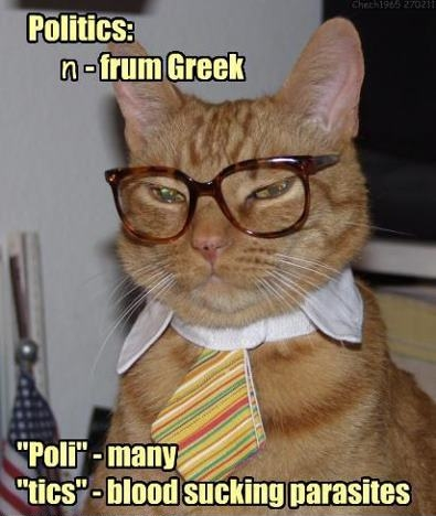 Professor Cat explaining politics