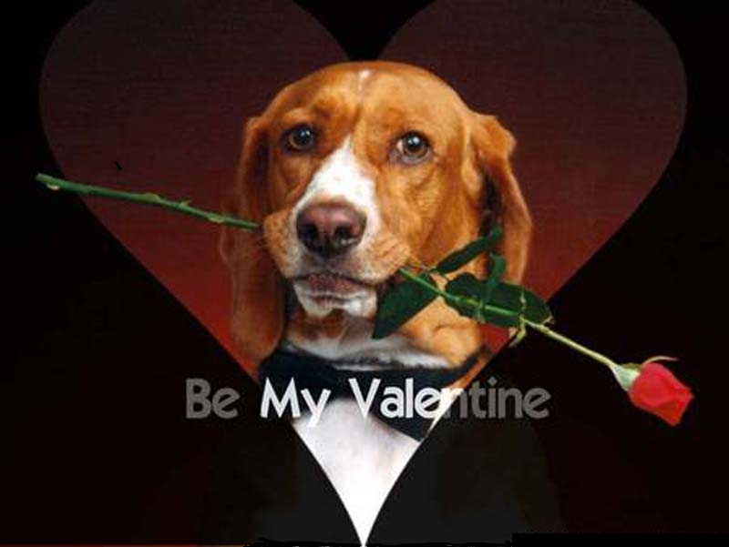 Beagle Be My Valentine