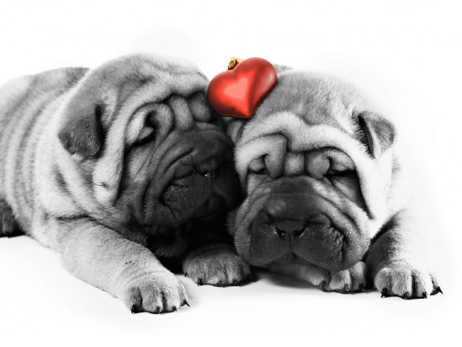 Valentine Two dogs One heart