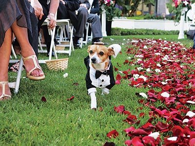 Wedding dog carpet of rose  petals