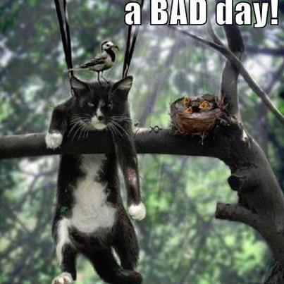 a bad day for cat hunting birds nest