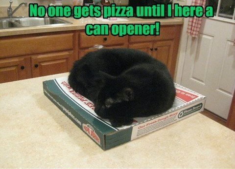cat guards pizza