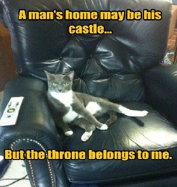 cat in house thinks that throne belongs to him