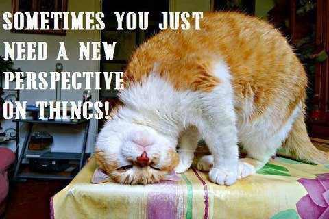 cat says you need a new perspective on things