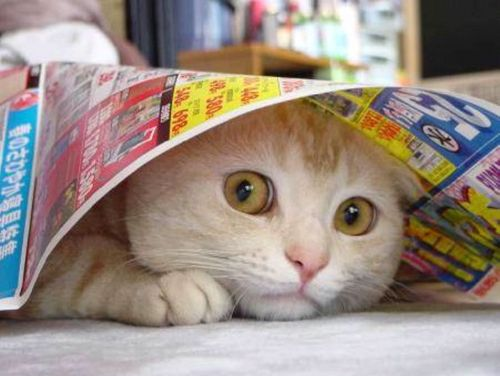 cat under newspaper