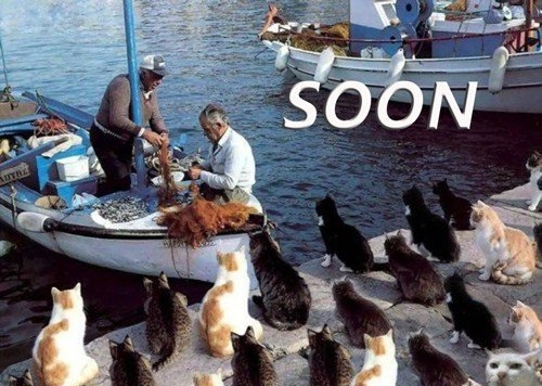 cats waiting for fischermans boat