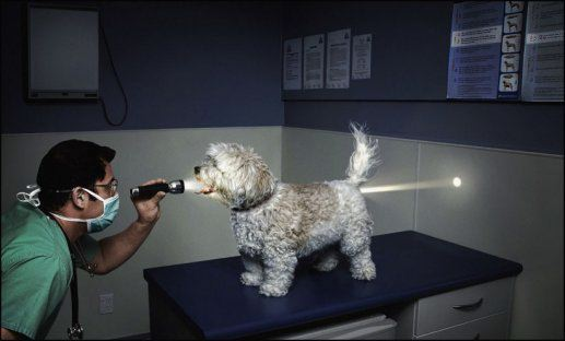 doctor examines dog all the way through